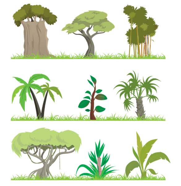 9 vector jungle trees illustrations