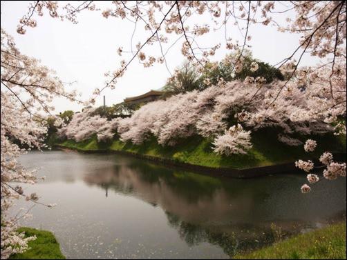 Beautiful-Spring-Landscape-spring-wallpaper