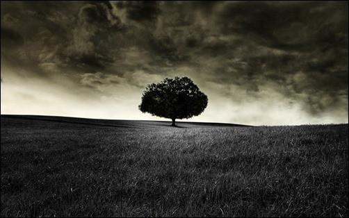 Black-Tree-Wallpaper-black-wallpaper