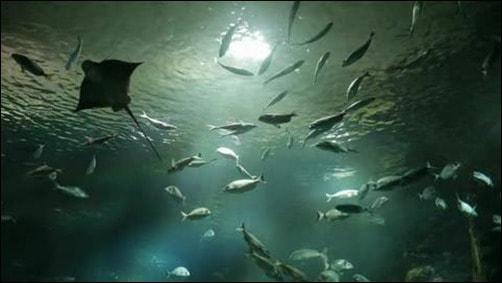 wpid-Sea-LIfe-1.jpg