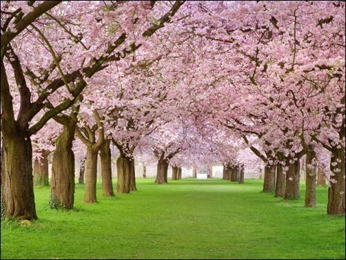 Spring-Tress-spring-wallpaper