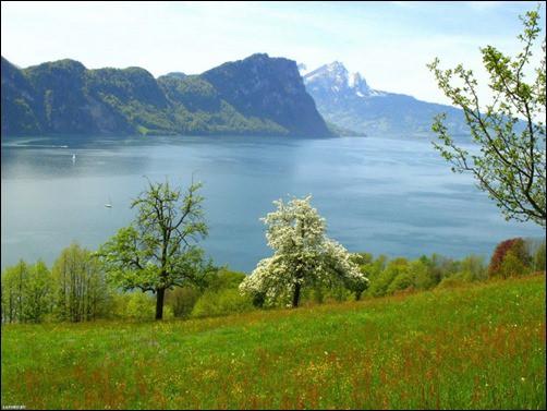 Spring-in-Switzerland-spring-wallpaper