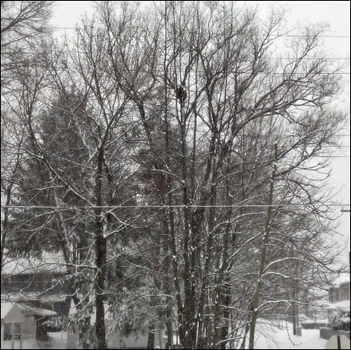Winter's-Touch-winter-wallpaper