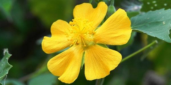 wpid-flower-photos.jpg