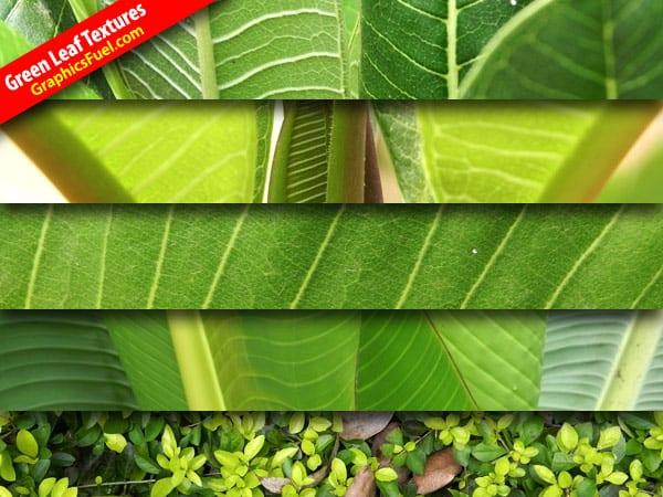 wpid-green-leaf-textures.jpg
