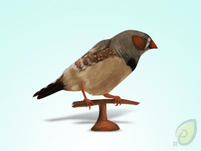 wpid-littlebirdpreview.png