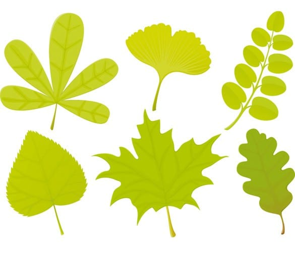 Unique Green Leaves Vector Collection