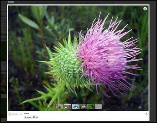 wpid-prettyphoto-mediathumb.jpg