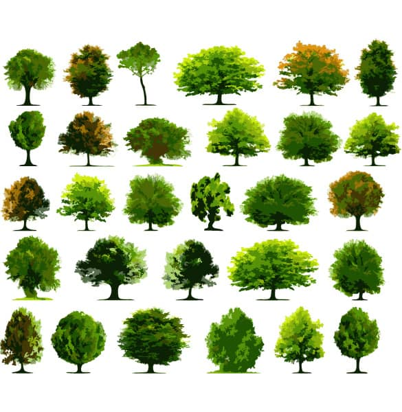30 varieties of vector tree illustrations for Garden trees types