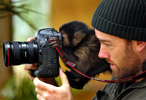 brillant photography collections