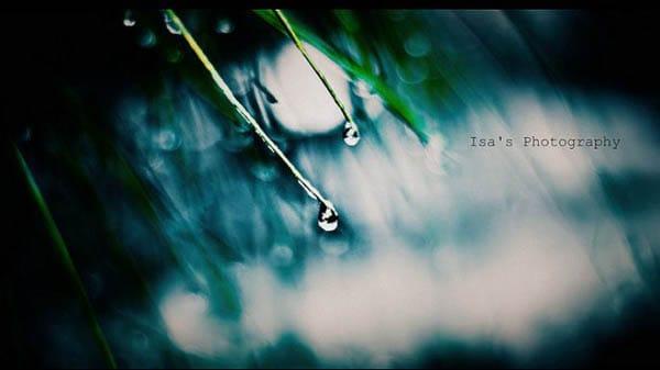 Rain Photography 1