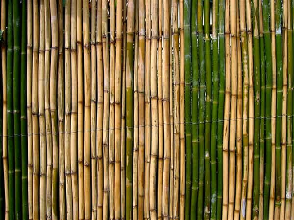 Bamboo Fence 2