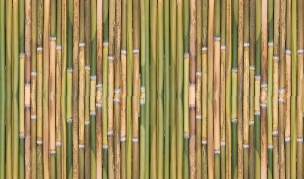 Green Bamboo Background