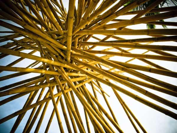 Yellow Bamboo