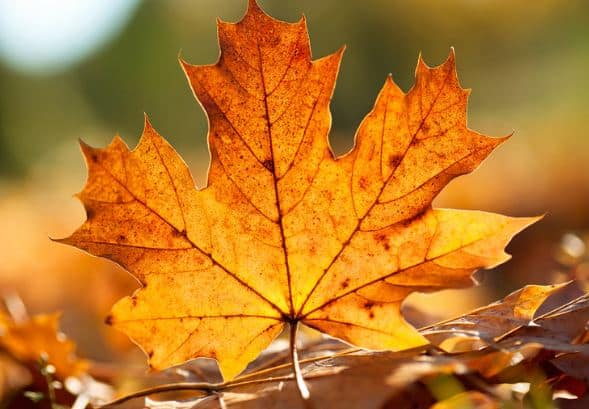 yellow-leaf-ipad-wallpapers
