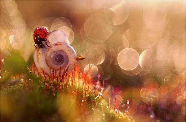 Amazing Bokeh Photography