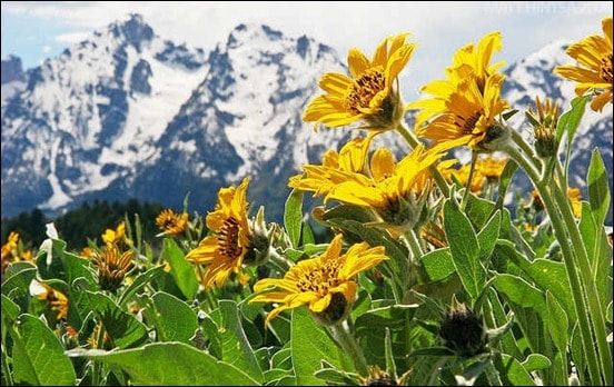 summer-in-the-tetons