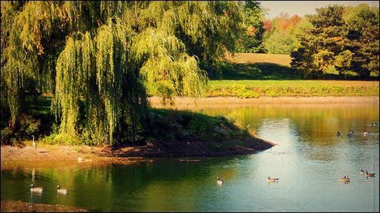 summer-into-autumn
