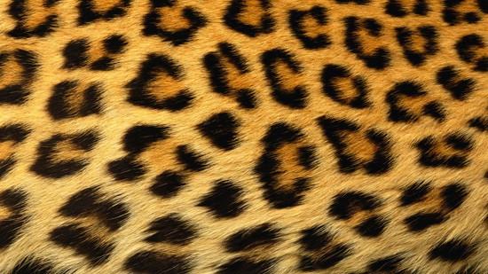 14-High-Resolution-Animal-Fur-Texture-Thumb01
