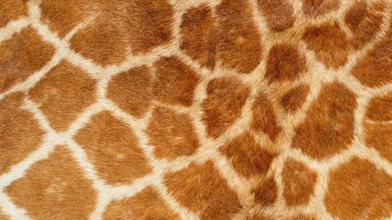 14-High-Resolution-Animal-Fur-Texture-Thumb05