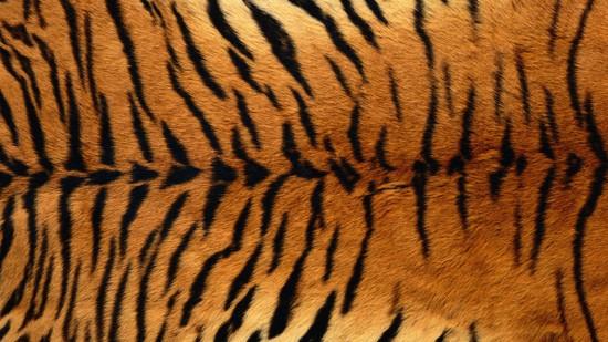 14-High-Resolution-Animal-Fur-Texture-Thumb12