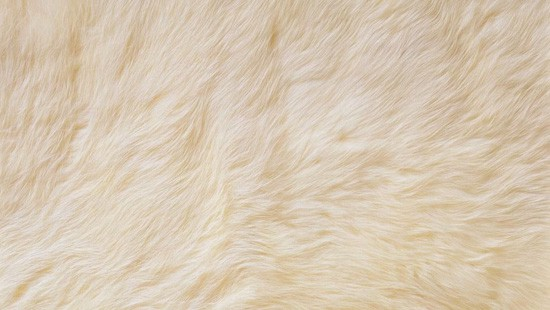 7-Animal-Fur-Texture-Thumb01