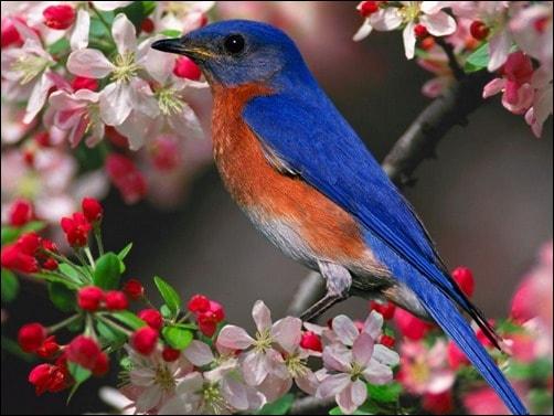 Spring-Bird-springtime-wallpaper