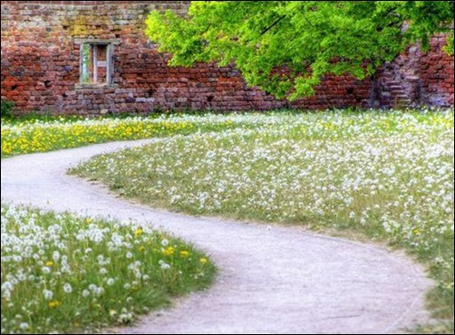 Spring-Flowers-spring-wallpaper[3]
