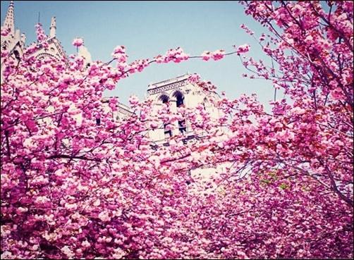 Spring-in-Paris-spring-wallpaper