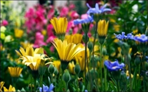Vail-Flowers-spring-wallpaper