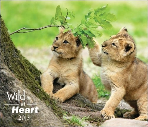 Wild-at-Heart-2013