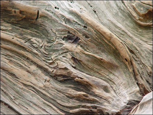 Wood-Texture