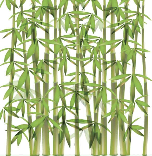 Green Bamboo Forest Vector Illustration