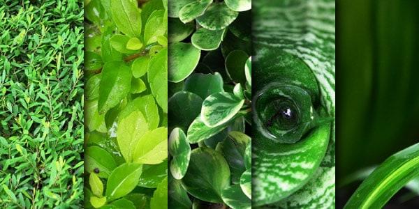 wpid-green-leaves-texture.jpg